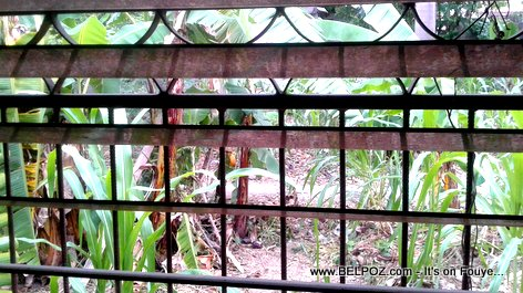 Window with a Garden View in Haiti, not just any garden LOL