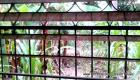 My window with a garden view in Haiti vs garden view in the United States!
