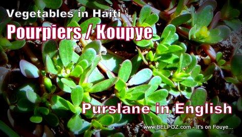 Vegetables in Haiti - Pourpiers / Koupye (purslane in English)