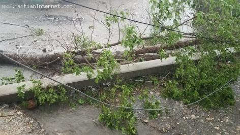 Haiti: A tree knocks out lightpole during heavy rain