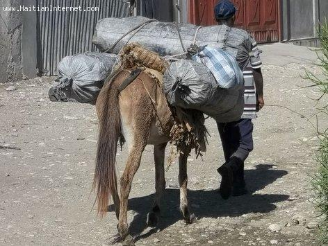 Deforestation in Haiti: A horse loaded with charcoal going to market