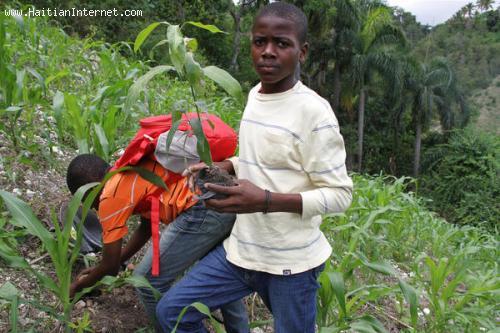 Haitian Mormons Planting Trees In Haiti