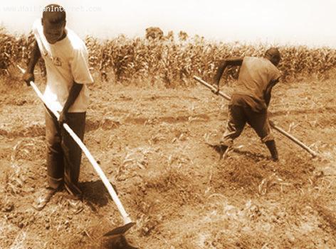 Agriculture in Haiti, Very Primitive