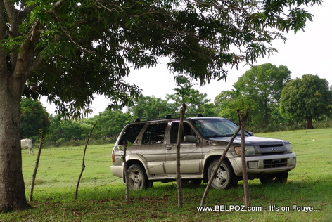Haiti Landscape - Sports Utility Vehicle under a Mango Tree
