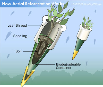 How Areal Reforestation Works