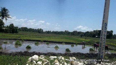 PHOTO: Haiti Agriculture - Yon Lagon Diri nan wout Ti Rivyè Latibonit