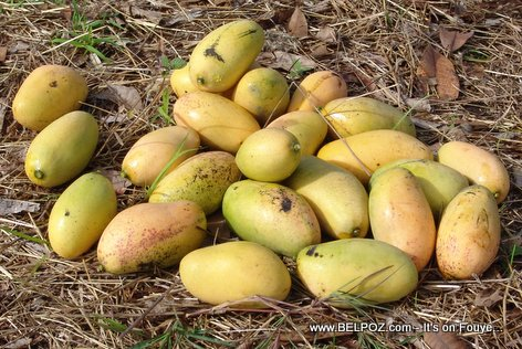 PHOTO: Fresh Mangoes from Haiti - Mango Janmari