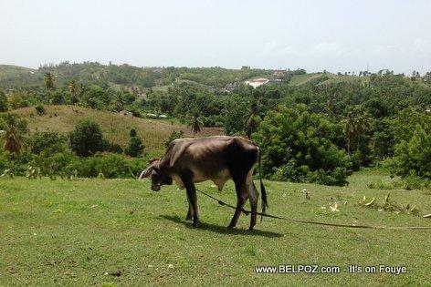 Haiti - Siw fè yon kay jouk anwo isit la, kilès kap vinn emerde-w?