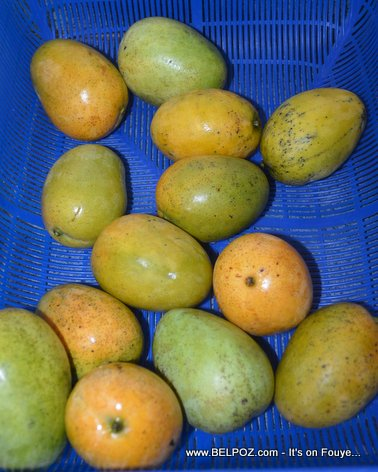 PHOTO: Fresh mangoes from Haiti - Mango Baptiste