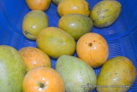 PHOTO: Fresh mangoes from Haiti - Mango Baptiste