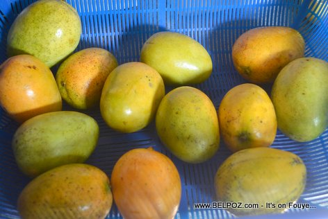 PHOTO: Fresh mangoes from Haiti - It's Mango Season!